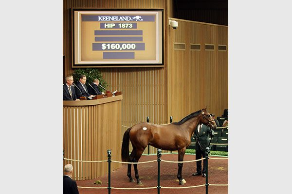 First Crop ALTERNATION Yearling Brings $160,000 at Keeneland September