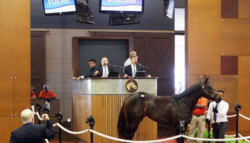 $135,000 2YO at Fasig-Tipton Midlantic