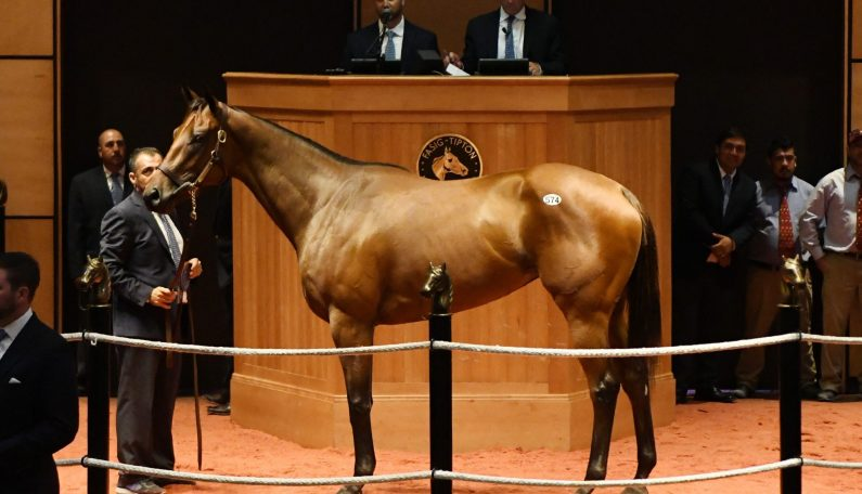 $675,000 for ALTER MOON, Second-Highest Price at F-T HRA Sale
