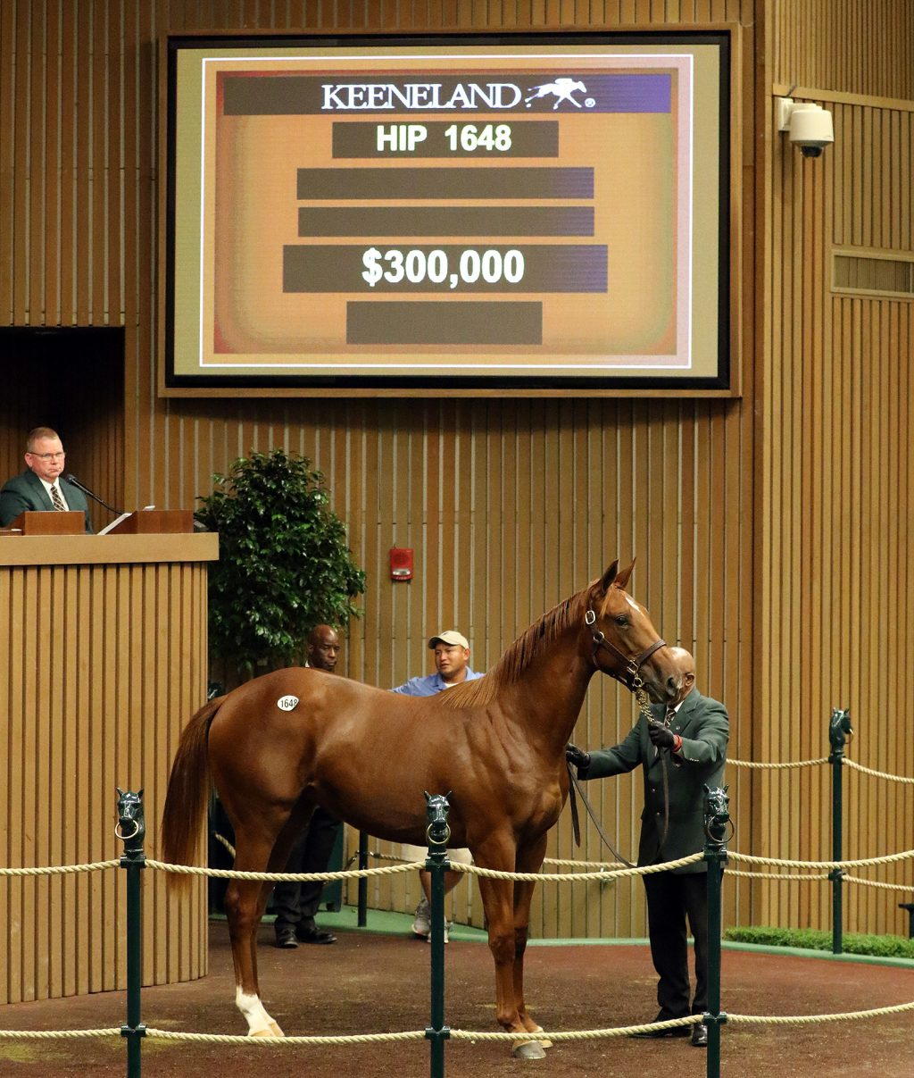 Hip1648 2018 Keeneland September Sale