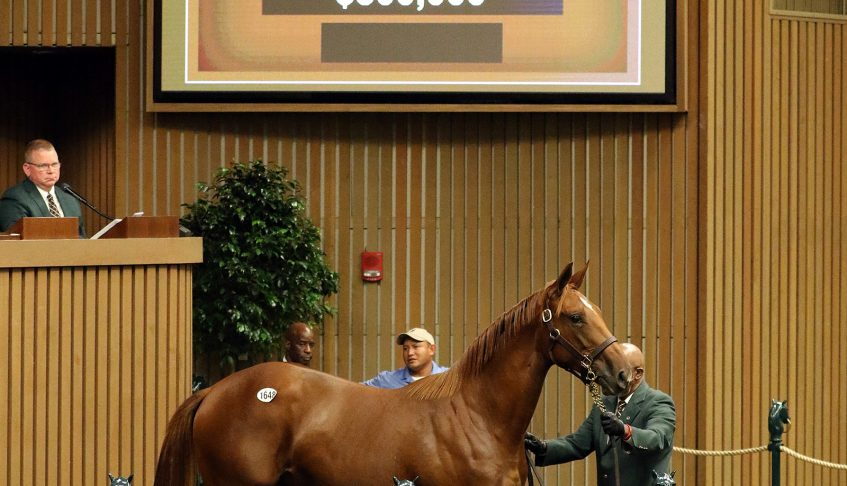 BROKEN VOW Filly Brings $300,000 at Keeneland September