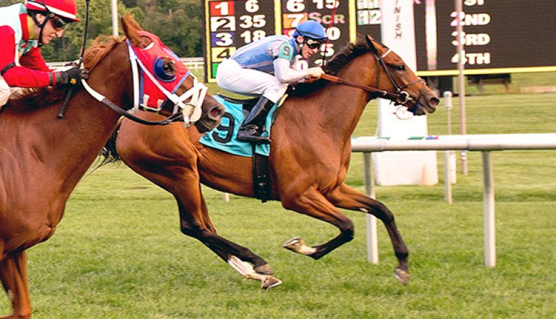 Half-sister to ALTERNATION Wins Penn Oaks
