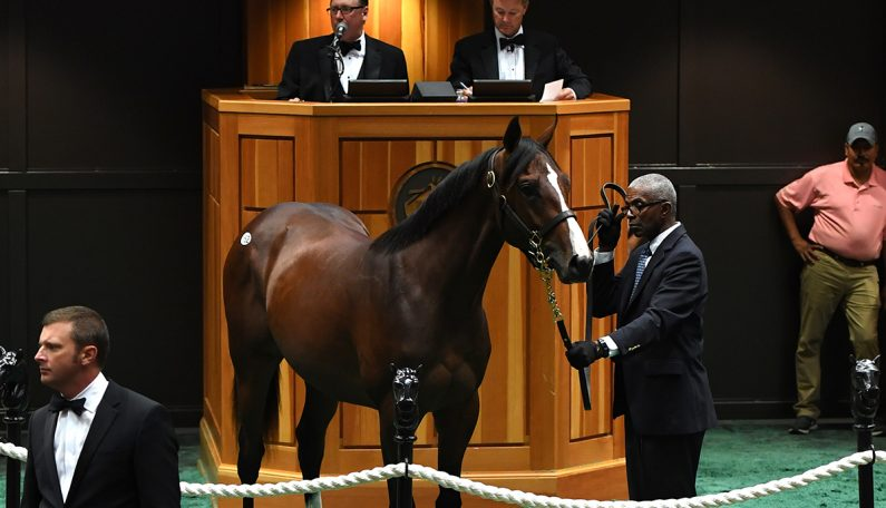 $400,000 BROKEN VOW Colt at Saratoga Select Sale